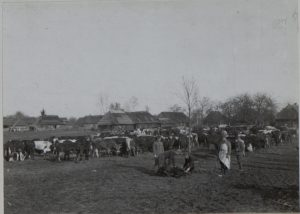 Schlachtviehdepot des 8.Korps, Gutterplatz, Perehinsko Februar 1916